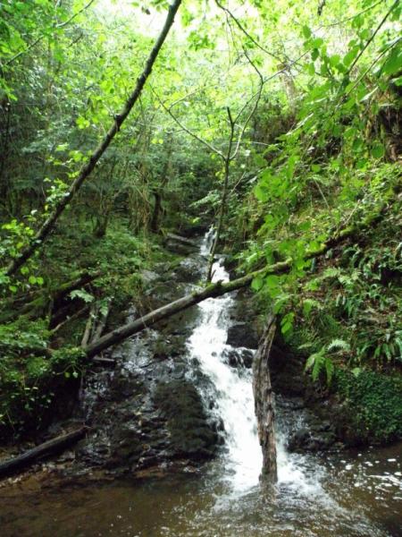 Bois du Marilhou (Trizac) Crédit : Thomas DARNIS