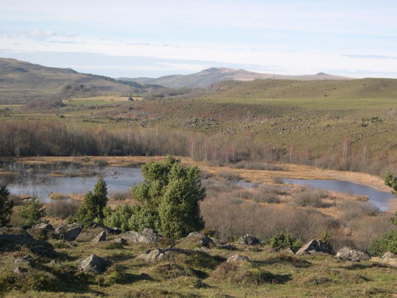 Tourbi�re de Champagnac (Chastel-sur-Murat) Cr�dit : CPIE de Haute Auvergne