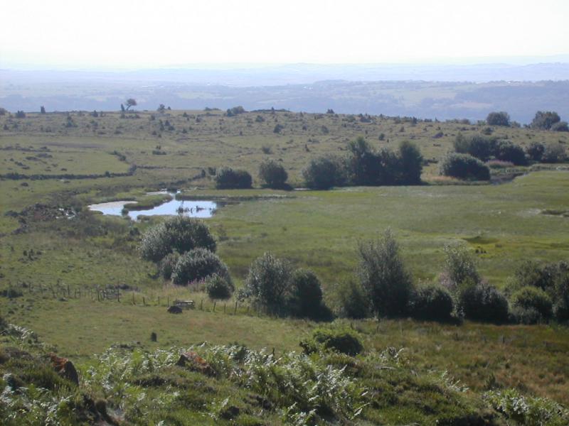 Tourbi�re de Brujaleine (Chastel-sur-Murat) Cr�dit : CPIE de Haute Auvergne