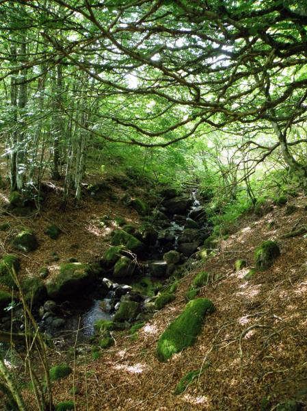 Bois du Marilhou Cr�dit : Thomas DARNIS