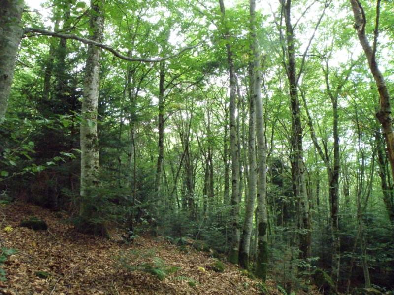 Bois du Marilhou Crédit : Thomas DARNIS