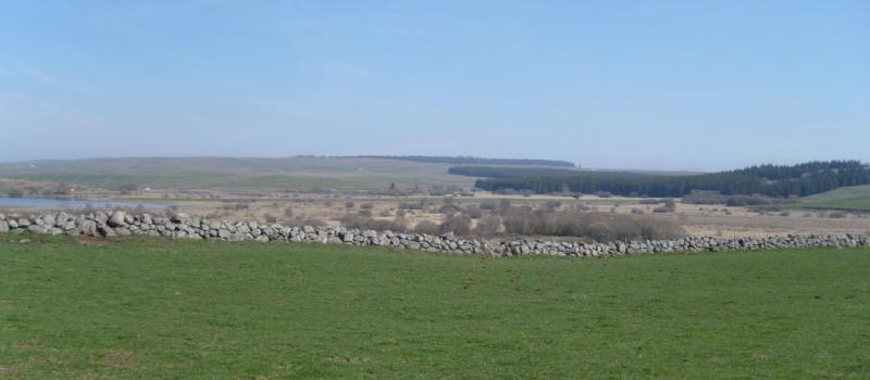 Plateau du Cézallier Crédit : Marie FELZINES