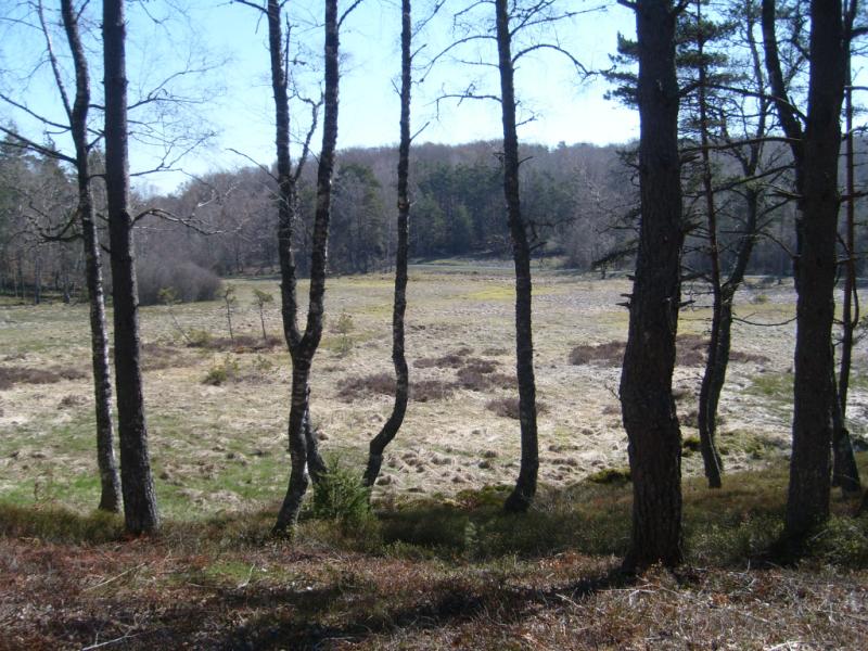 Tourbière des Vergnes des Mazes (Lieutadès)