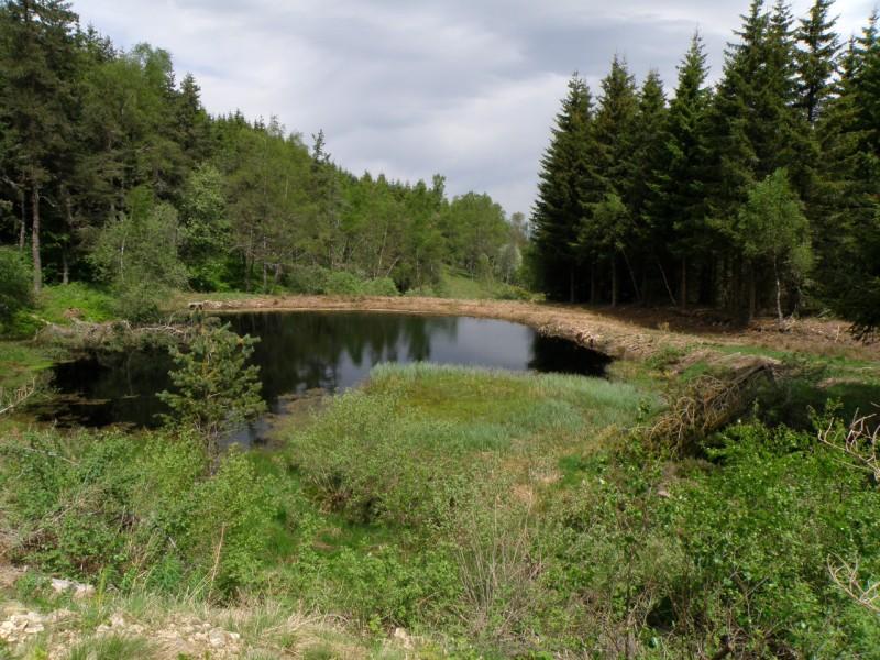 Zone humide Puy de la Tuile Cr�dit : ONF