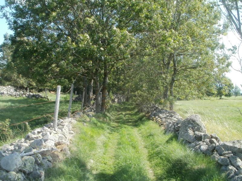 Chemin bordé de pierres entre Maniargues, commune de Valuéjols , et les ruines de Lagarde, commune de Laveissenet - Réseau VTT de la Planèze,  Crédits : CD15-BBT