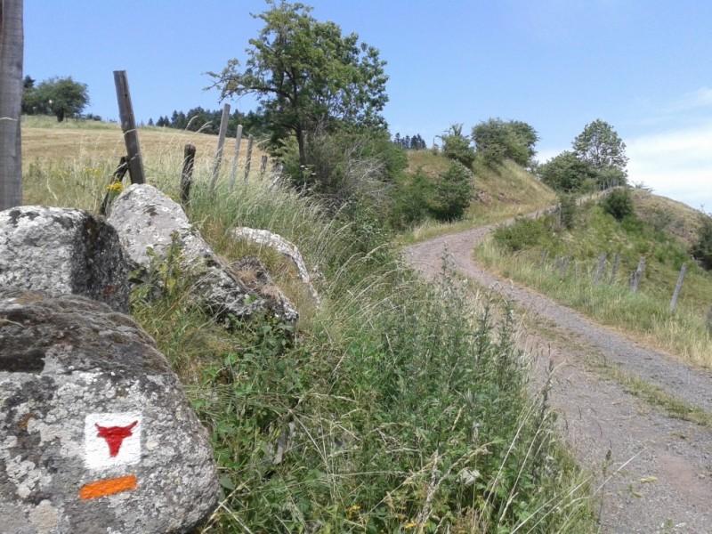 Le Tour des Vaches Rouges, après le hameau du Bac Haut, commune d'Allanche,  Crédits : CD15-BBT