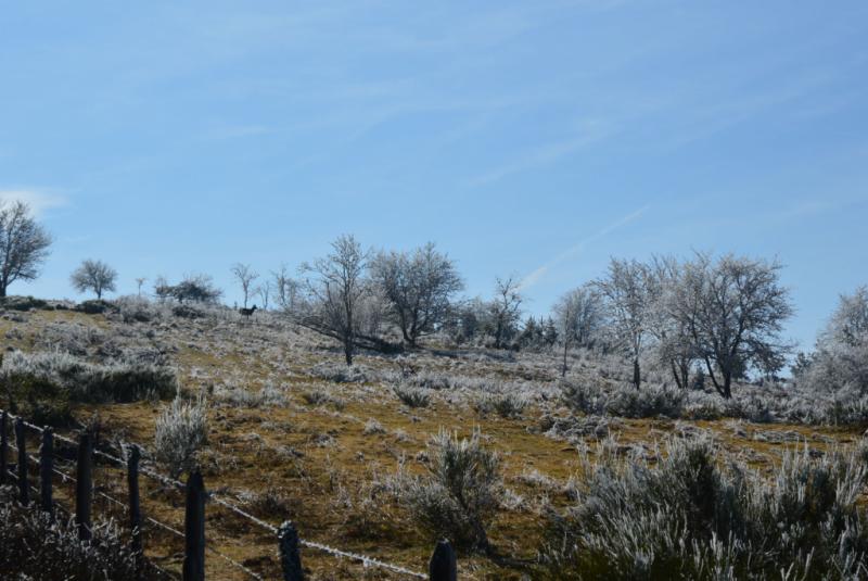 Estives du plateau de Chastel sur Murat, Crédit : cbeaudrey