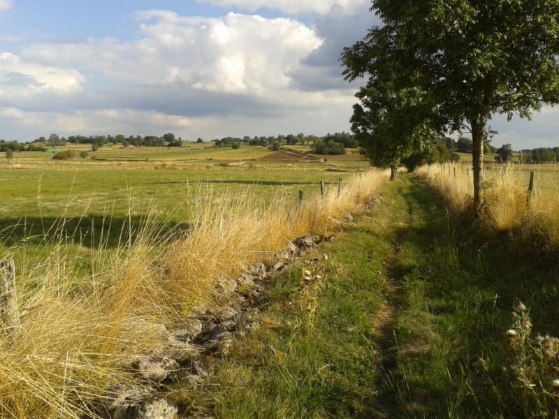 GRP® de Saint-Flour, boucle de la Planèze, en approche de la narse de Lascols, commune de Cussac,  Crédits : CD15-BBT